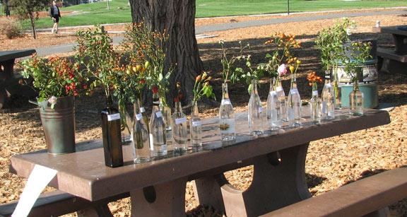 Fall In The San Jose Heritage Rose Garden